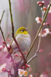 鳥i梅と.jpg