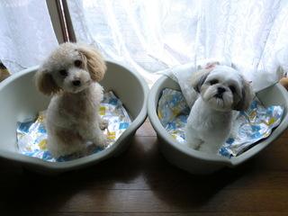2008_0810遥と犬0017.JPG