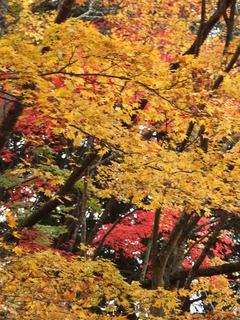 2010_1130_005407-4京都 071.JPG