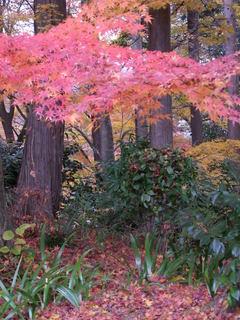 2010_1130_012529-4京都 089.JPG