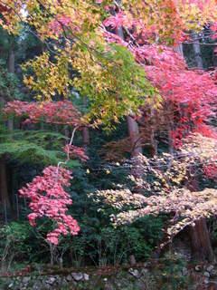 2010_1130_014728-4京都 147.JPG