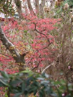 2011_0418花見山0113.JPG