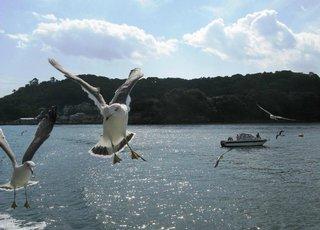 海鳥たち松島.jpg